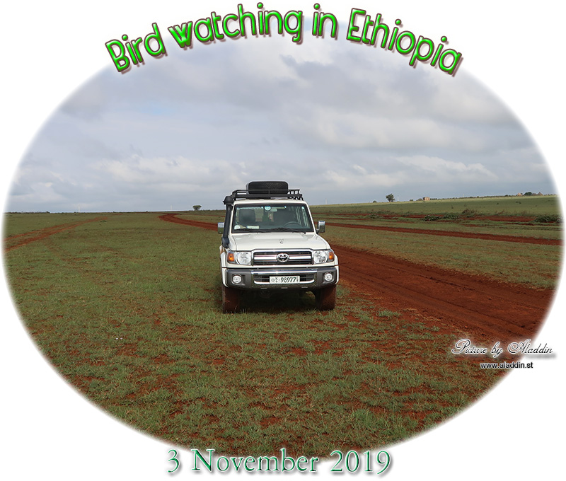 looking for a car date in jijiga