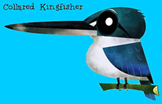 Collared Kingfisher - Green humour
